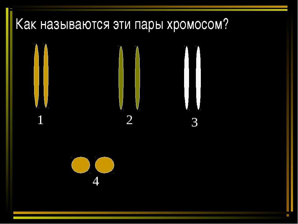 Как называются эти пары хромосом? 1 2 3 4