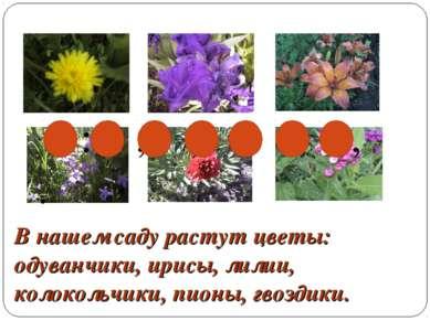 В нашем саду растут цветы: одуванчики, ирисы, лилии, колокольчики, пионы, гво...