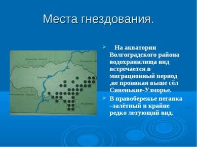 Места гнездования. На акватории Волгоградского района водохранилища вид встре...