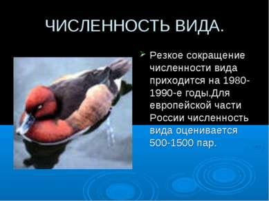 ЧИСЛЕННОСТЬ ВИДА. Резкое сокращение численности вида приходится на 1980-1990-...