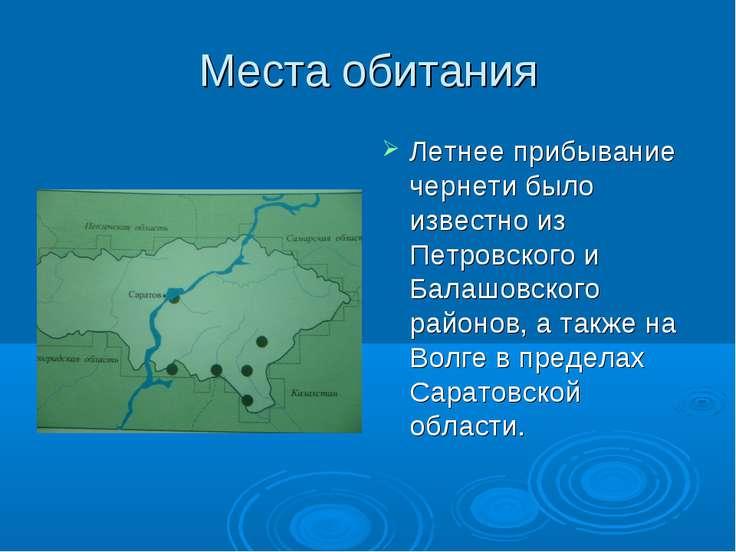 Места обитания Летнее прибывание чернети было известно из Петровского и Балаш...