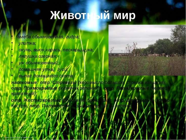 Животный мир амеба обыкновенная, гидра; улитка; окунь, вьюн,карась, пескарь,щ...