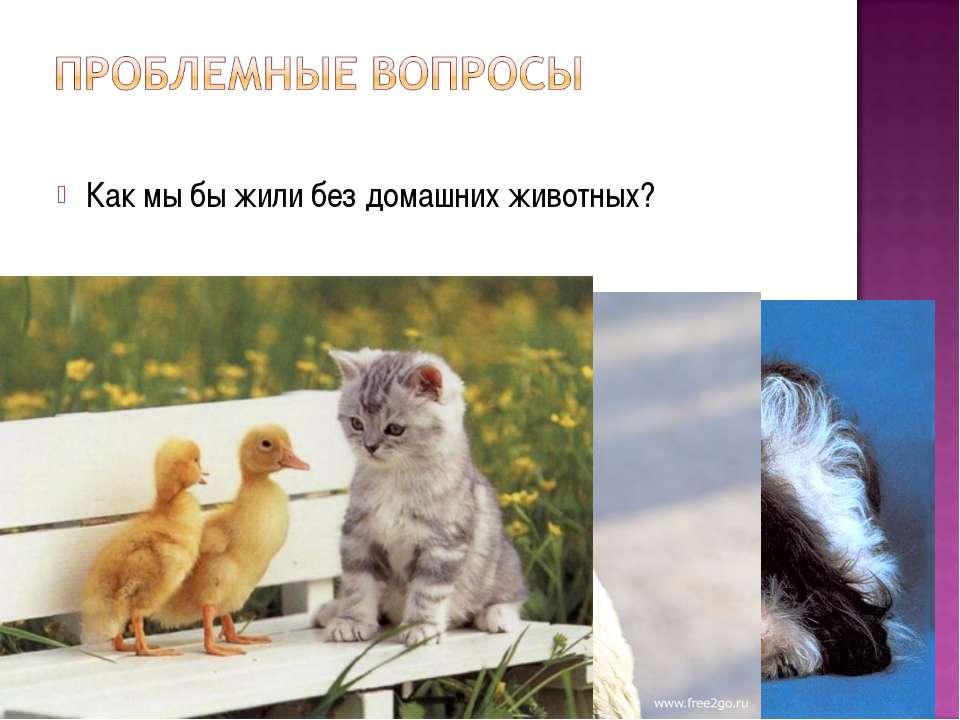 Как мы бы жили без домашних животных?