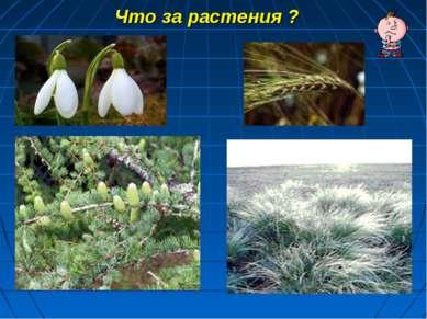 Что за растения ?