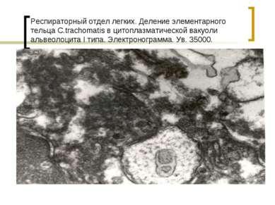 Респираторный отдел легких. Деление элементарного тельца С.trachomatis в цито...