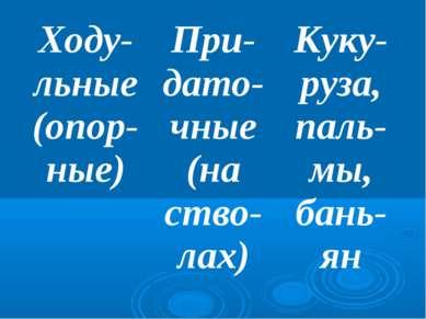 Ходу-льные (опор-ные) При-дато-чные (на ство-лах) Куку-руза, паль-мы, бань-ян