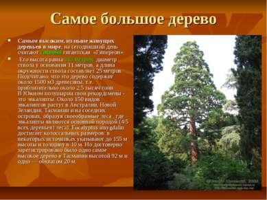 Самое большое дерево Самым высоким, из ныне живущих деревьев в мире, на сегод...