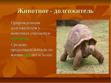 Животное - долгожитель Прирожденным долгожителем у животных считаются-черепах...