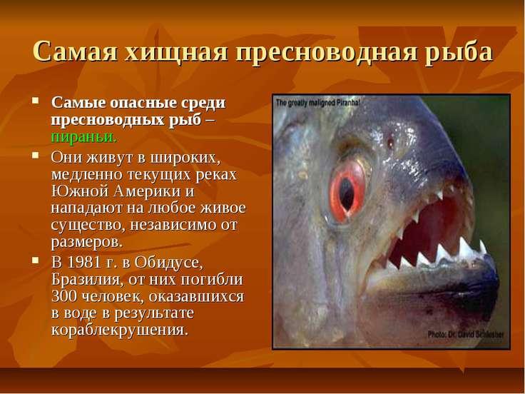 Самая хищная пресноводная рыба Самые опасные среди пресноводных рыб – пираньи...