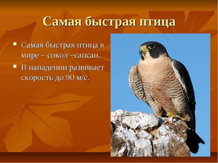 Самая быстрая птица Самая быстрая птица в мире – сокол –сапсан. В нападении р...