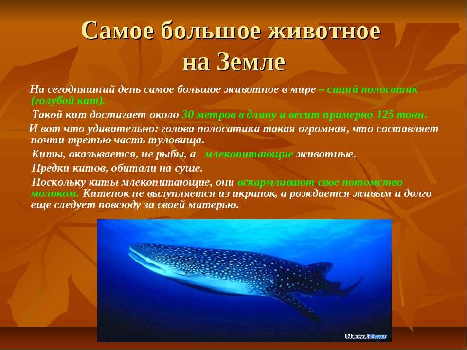 Самое большое животное на Земле На сегодняшний день самое большое животное в ...