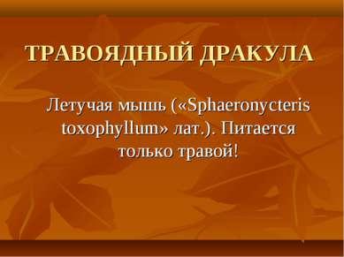 ТРАВОЯДНЫЙ ДРАКУЛА Летучая мышь («Sphaeronycteris toxophyllum» лат.). Питаетс...