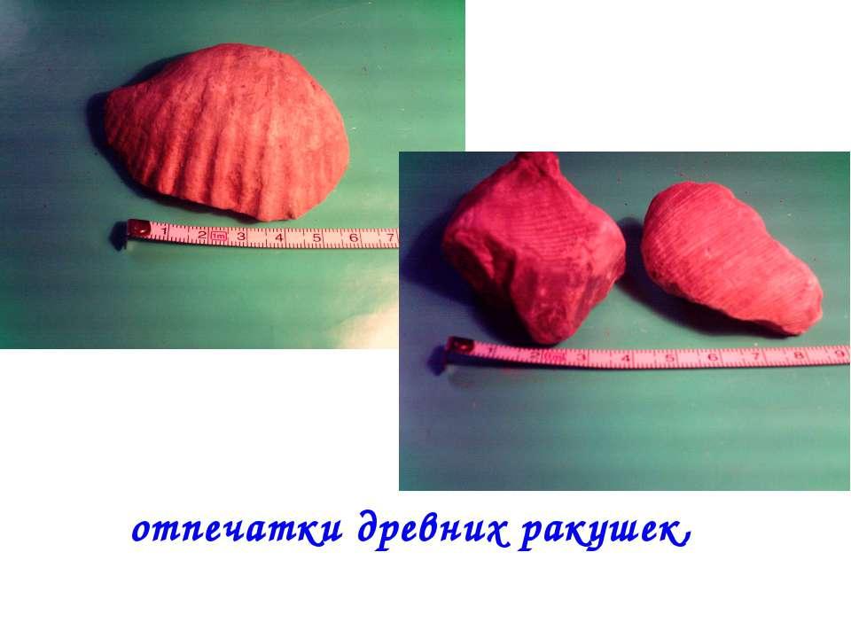 отпечатки древних ракушек,