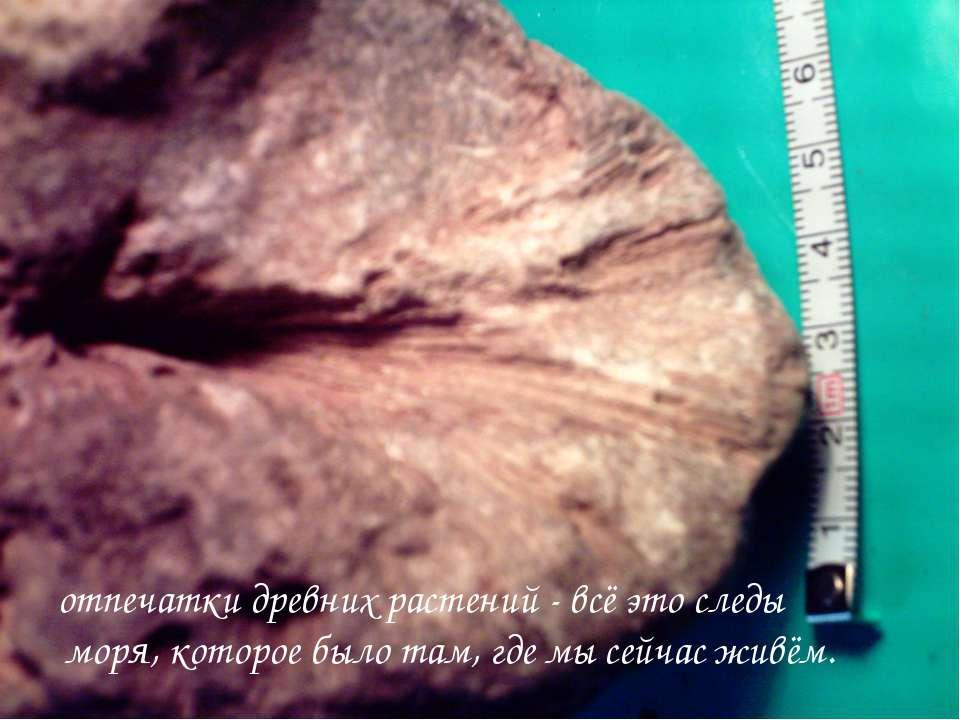 отпечатки древних растений - всё это следы моря, которое было там, где мы сей...