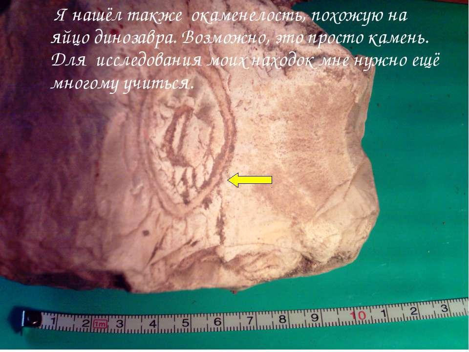 Я нашёл также окаменелость, похожую на яйцо динозавра. Возможно, это просто к...