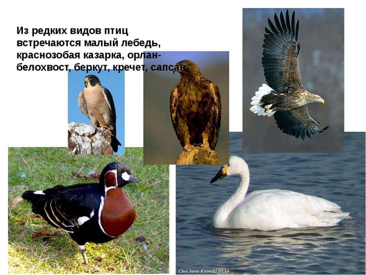 материалы какие птицы обитают в алтайском обычное теплое