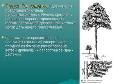 * Предки Голосеменных: древнейшие представители отдела папоротниковидных. Име...