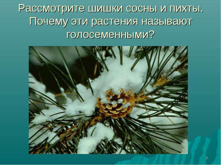 * Рассмотрите шишки сосны и пихты. Почему эти растения называют голосеменными?