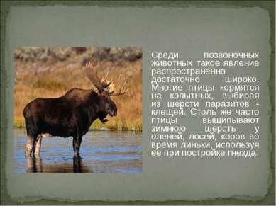 Среди позвоночных животных такое явление распространенно достаточно широко. М...