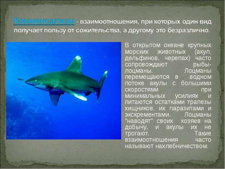 В открытом океане крупных морских животных (акул, дельфинов, черепах) часто с...