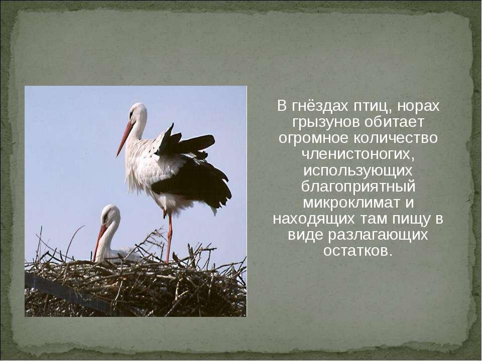 В гнёздах птиц, норах грызунов обитает огромное количество членистоногих, исп...