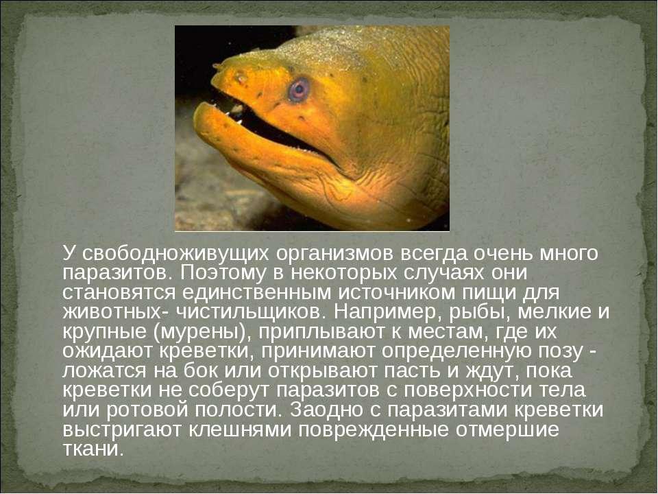 У свободноживущих организмов всегда очень много паразитов. Поэтому в некоторы...