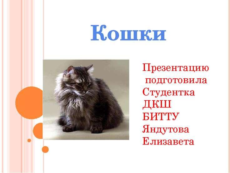 Кошки Презентацию подготовила Студентка ДКШ БИТТУ Яндутова Елизавета