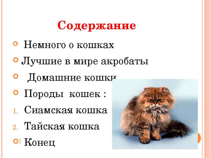 Содержание Немного о кошках Лучшие в мире акробаты Домашние кошки Породы коше...