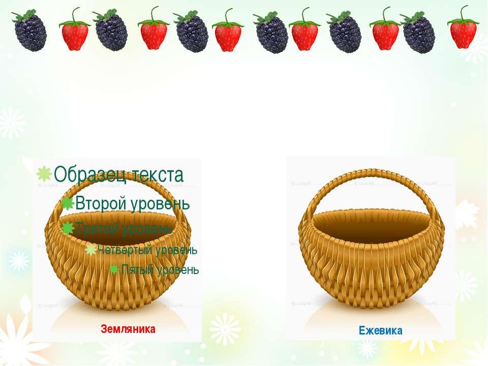 Ежевика Земляника