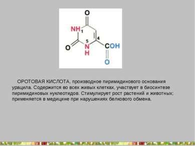 ОРОТОВАЯ КИСЛОТА, производное пиримидинового основания урацила. Содержится во...