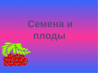 Семена и плоды