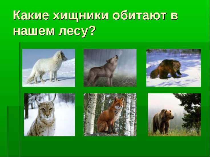Какие хищники обитают в нашем лесу?