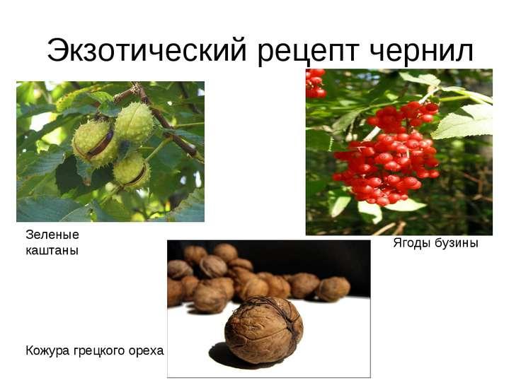 Экзотический рецепт чернил Зеленые каштаны Ягоды бузины Кожура грецкого ореха