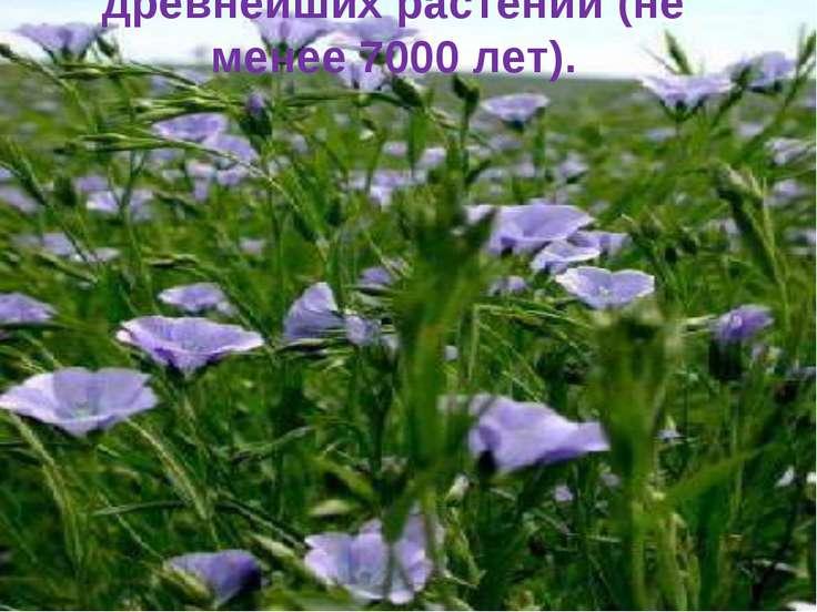 Лён является одним из древнейших растений (не менее 7000 лет).