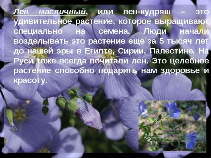 Лен масличный, или лен-кудряш – это удивительное растение, которое выращивают...