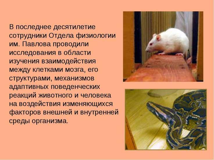 В последнее десятилетие сотрудники Отдела физиологии им. Павлова проводили ис...