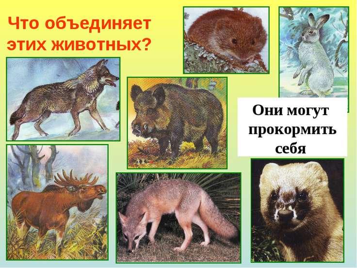 Что объединяет этих животных? Они могут прокормить себя