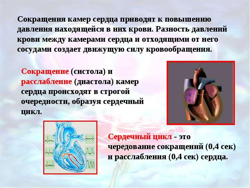 Сокращения камер сердца приводят к повышению давления находящейся в них крови...