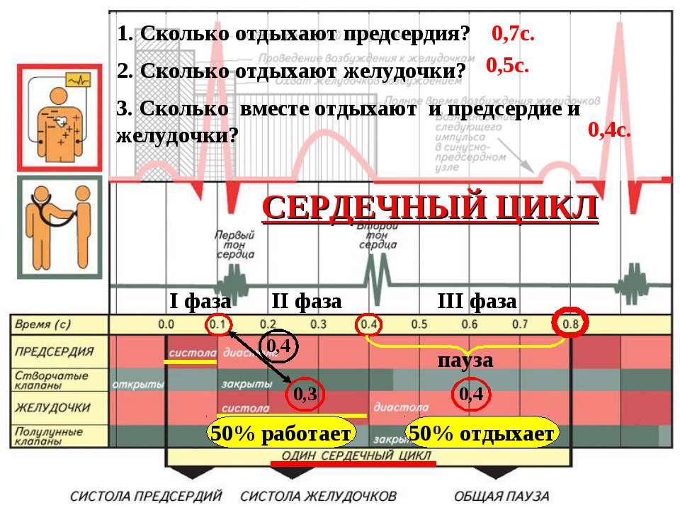 I фаза II фаза III фаза пауза СЕРДЕЧНЫЙ ЦИКЛ 0,3 0,4 0,4 50% работает 50% отд...