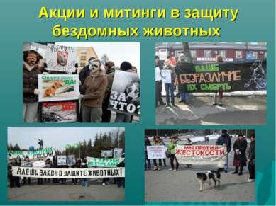 Акции и митинги в защиту бездомных животных