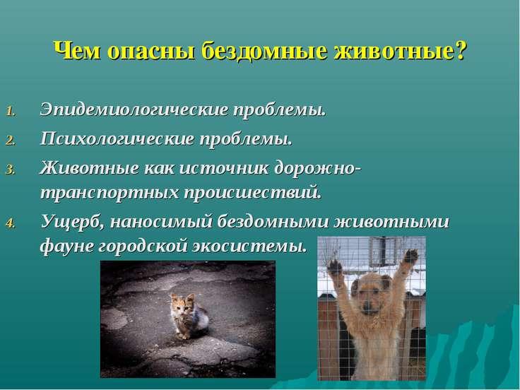 Чем опасны бездомные животные? Эпидемиологические проблемы. Психологические п...