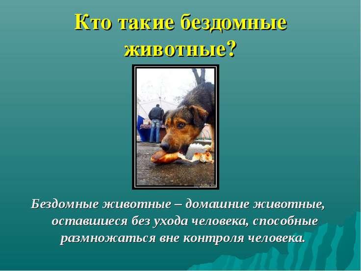 Кто такие бездомные животные? Бездомные животные – домашние животные, оставши...