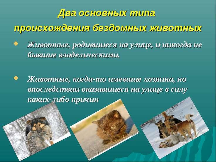 Два основных типа происхождения бездомных животных Животные, родившиеся на ул...