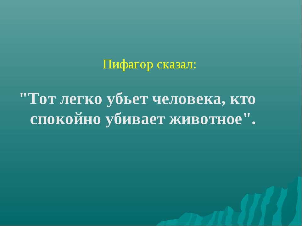 """Пифагор сказал: """"Тот легко убьет человека, кто спокойно убивает животное""""."""