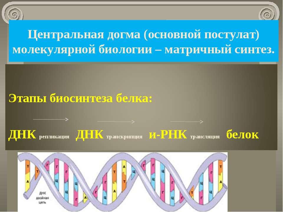 Центральная догма (основной постулат) молекулярной биологии – матричный синте...