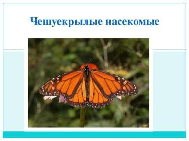 Чешуекрылые насекомые