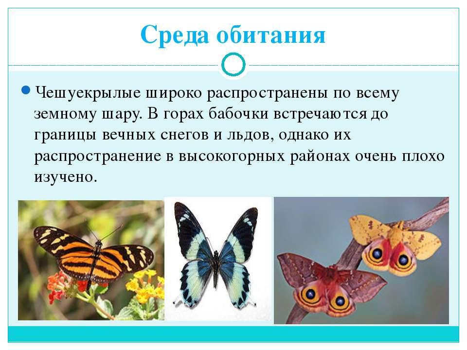 Среда обитания Чешуекрылые широко распространены по всему земному шару. В гор...