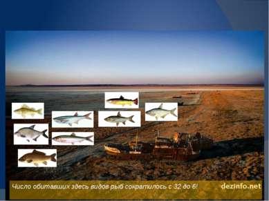 Международный Фонд Спасения Арала Очищение воды Аральского моря. Очищение бер...