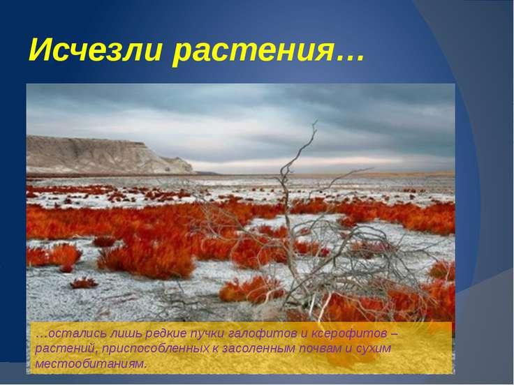 Аралкум – самая молодая пустыня в мире...