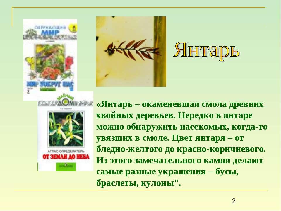 «Янтарь – окаменевшая смола древних хвойных деревьев. Нередко в янтаре можно ...